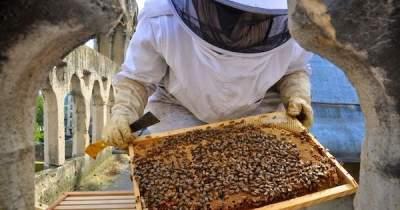 Пожар в Нотр-Даме пережили 180 тысяч пчел