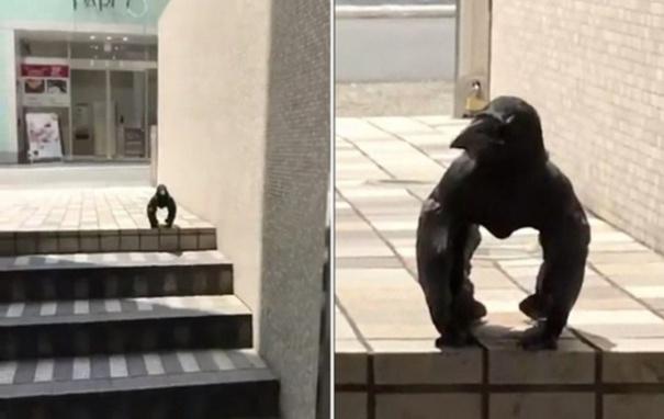 Видео с мускулистой вороной без лап покоряет Сеть