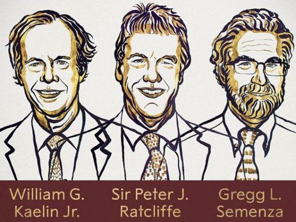 Нобелевскую премию в области медицины получат трое ученых