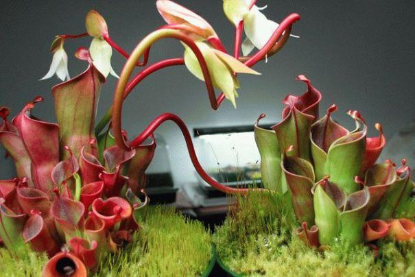 Как выращивать дома растения-хищники