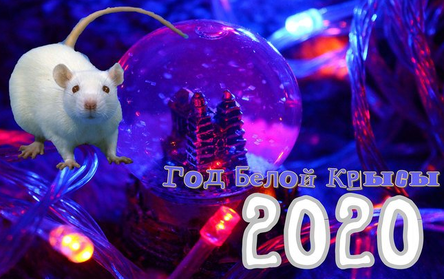 Астрологический прогноз на 2020-й год Белой Крысы