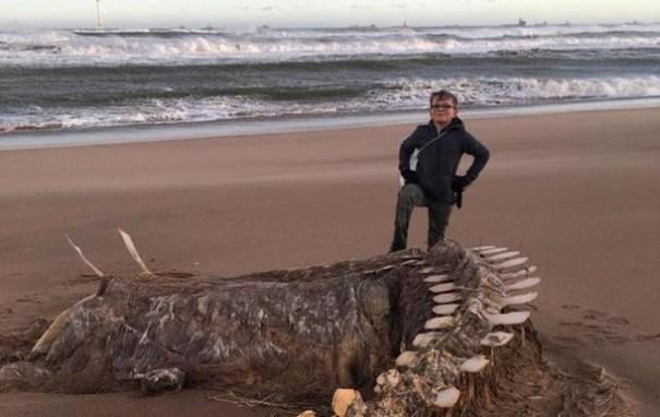 На побережье Мексики выбросило неизвестное существо: фото