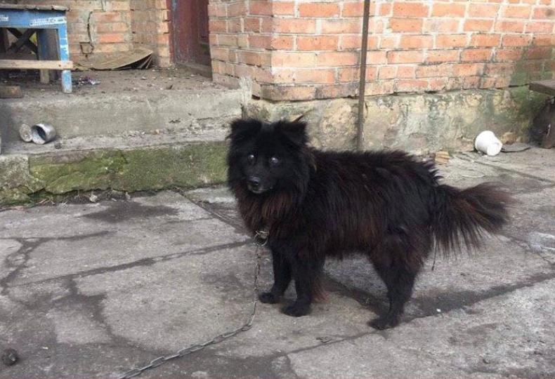 Нашли собаку, которую нардеп предложил продать