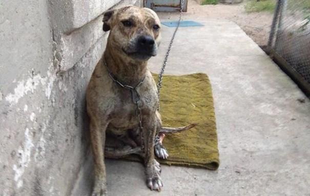 Малюська пояснил ситуацию с продажей на аукционе собаки