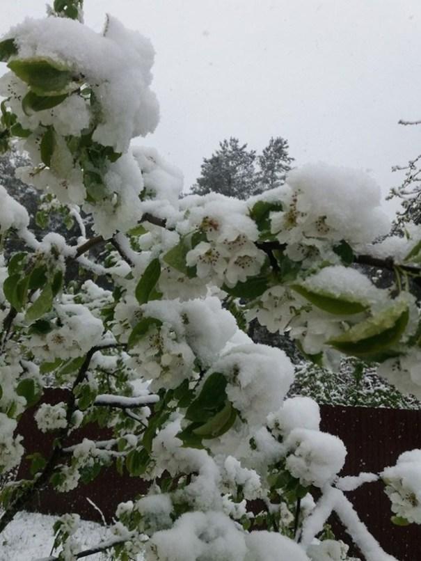 За неделю до лета Карпаты засыпало снегом
