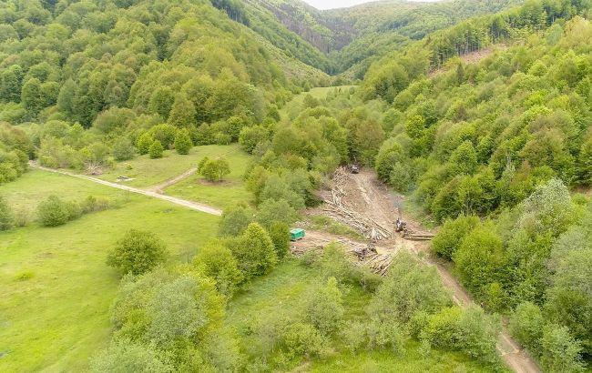 Президент запустил процесс инвентаризации лесов