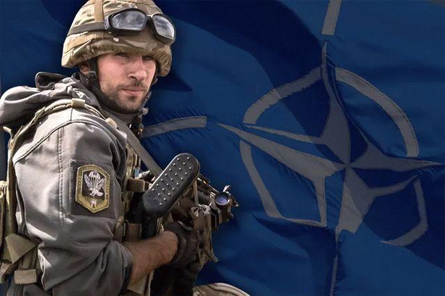Кривонос рассказал, где в Украине необходимо разместить базу НАТО