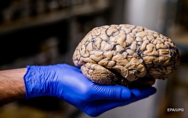 Коронавирус может напрямую поражать нейроны мозга