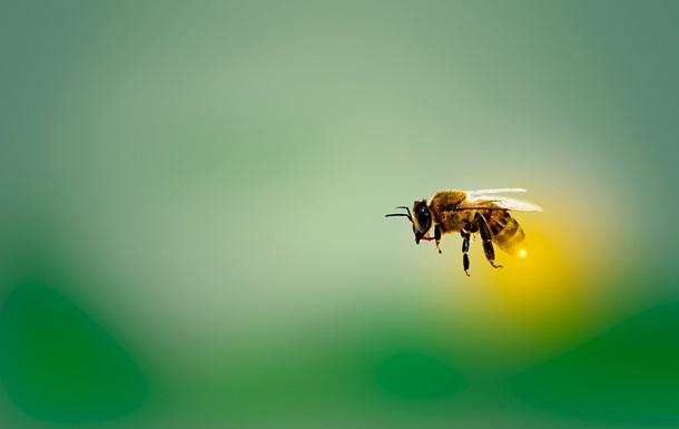 Обнаружена способность пчел очищать воздух