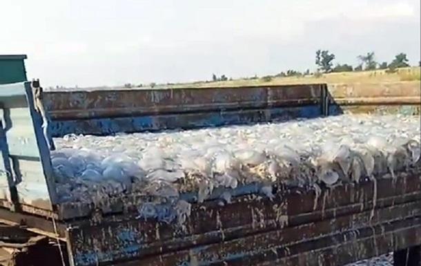 В Кирилловке мертвых медуз вывозят прицепами тракторов