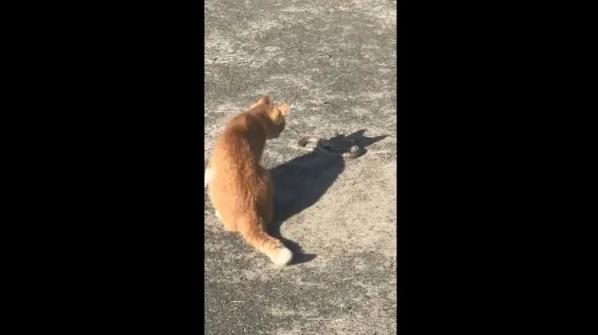 В Херсоне дворовой кот убил сбежавшую из зоопарка змею, видео